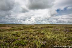De Slufter (Chantal van Breugel) Tags: landschap texel zomer slufter lamsoor noordholland juli 2017 canon5dmark111 canon1635