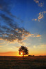 Sunset (Sareni) Tags: sareni serbia srbija vojvodina banat juznibanat alibunar utrina polje poljana livada field grass trava tree drvo sky clouds nebo oblaci colors light svetlost boje sun sunce hdr highdynamicrange evening vece sunset zalazak summer leto july 2017 twop