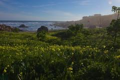 paisaje flores (José Álvarez Vera) Tags: lanscape paisaje chile elquisco nature wild naturaleza