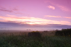 Colourful sunrise on the way to Hull (JerryGoulet) Tags: nikonflickraward sunrise nikon england wilderness atmosphere light sun clouds sky nature wild expression pink red skies field wheat natural natureversushuman naturetakingover flickrelite
