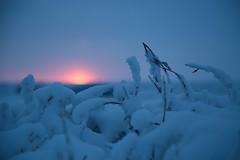 Last Sunset of 2016 (Kristaaaaa) Tags: polarnight tuktoyaktuk polar night nwt canada arctic canon5dmkiii canon5d sunset winter