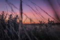 Uluru - Sunset-13