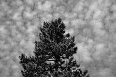 Cotton Clouds (room76com) Tags: cologne germany pocketgermany landscapes bnw blackandwhite monochrome nikon nature trees clouds cloudy weather abstract cotton texture lightroom adobe summer sunny sun creative koeln himmel wolken sonne sommer