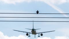 One bird to another. (Dubspotter2015) Tags: abstractaviation abstract aviation birds birdsofflight aerlingus life beautiful