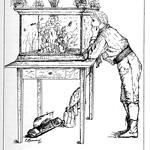 In sloot en Plas 1898,  ill  aquarium thumbnail