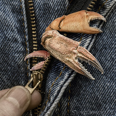 Oh No! I've Got Crabs! (SkyeWeasel) Tags: crabs macro claws crabclaws surreal surrealism zipper