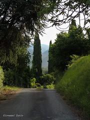 Un po' di verde..... (ioriogiovanni10) Tags: profumodicampagna verde colline alberi mattino coolpix strada passeggiata camminare street sentiero campagna green nikon