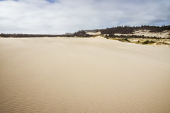 Oregon Dunes National Recreation Area (C@rlos@FC Photography) Tags: gardiner oregon unitedstates