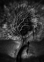 Tomorrow's Tree (Skin Soul) Tags: surrealism tree art photography illustration creativeartphoto conceptualphotography thetravelerproject