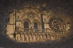Île de la Cité (zora_schaf) Tags: zoraschaf detail abstrakt pfütze reflection spiegelung paris notredame art