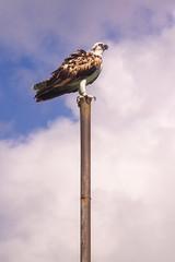 Lookin' a Bit Rough (Jerry Bowley) Tags: rivieramaya xelha ecopark bird allinclusive