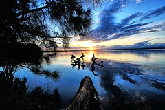 Pelican perch. (Ian Ramsay Photographics) Tags: mungobrushcampsite myalllakesnationalpark newsouthwales australia pelican perch partly old submerged log provides perfect roost night