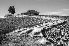 winding tuscany road (cktse) Tags: bw italy pienza tuscany