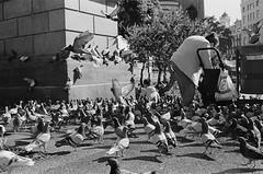 * (doistrakh) Tags: slr olympus om4ti zuikoautos40mmf2 filmcamera vintagecamera 135 film monochrome bw blackandwhite travel europe spain espana streetphotography catalunya barcelona plaçadecatalunya pigeon