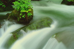 Mountain Stream Hymn 2 (chikaraamano) Tags: valley stream green vegetation gap feeling coolsound summer immediateness surroundingfores outdoorforest moss oasis groves outsidewater mountain dropssolemnly charmed purified greatly nature warmth loved