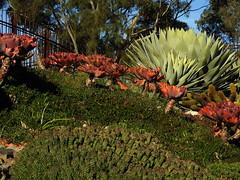 DSCN3088 (Lesley A Butler) Tags: victoria royalbotanicgardens melbourne guilfoylesvolcano australia