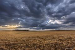 Atardecer en el rastrojo (Anpegom fotografía) Tags: atardecer crepusculo rastrojo nubes mucientes valladolid castillayleón españa spain verano dorado