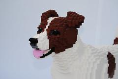 Dog (Felix Jaensch) Tags: dog lego sculpture mammal animal pet jack russel