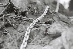 Chain (goodfella2459) Tags: nikon f4 af nikkor 50mm f14d lens fomapan profilineclassic 100 35mm blackandwhite film analog chain treestump bwfp milf aperture