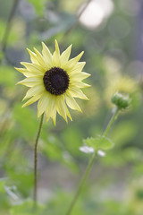 (gkoertel) Tags: flower flowers stlouis forestpark stl explorestlouis bokeh