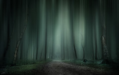 Dark Woods (ScottSimPhotography) Tags: misty mist fog foggy dunnottar woods forest nature natural landscape eerie ethereal trees lane track leaves green dark dramatic stonehaven scotland spooky gameofthrones sony a6000 scottish uk britain visitscotland darkness ghostly
