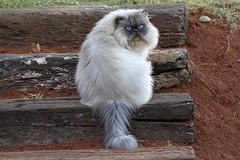 5404 (fpizarro) Tags: bambuí centrooeste minasgerais mg pds pordosol pássaros sol céu azul aoarlivre animal gato cão cachorro fpizarro