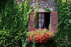 Open window (zinnia2012) Tags: stone building medievalvillage yvoire france shutters geraniums ivy window curtains zinnia2012 fenêtre