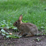 Bunny on Campus (August 1st, 2017) thumbnail