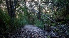 A walk in the wood - Bruny (Val A[d]venture) Tags: australia australie voyageur backpacker valaventure valadventure tasmania tassie tasmanie canon eosm3 june 2017 brunyisland bruny island