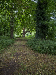 Path to Pergola (Ian M Bentley) Tags: scotlandpond castleashby pond lake treearch pergola nature natural branches leaves woodland olympus omd em5ii zuikopro1240mm wideangle july summer path pathway green red northamptonshire england uk outdoor serene relax foliage trees plant water forest