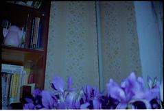 11ю1 (swan.mary) Tags: film эликон street home green 1stroll purple blue flowers wall ukraine analog kiev