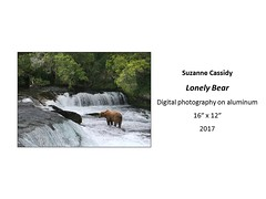 "Lonely Bear • <a style=""font-size:0.8em;"" href=""https://www.flickr.com/photos/124378531@N04/35966110456/"" target=""_blank"">View on Flickr</a>"