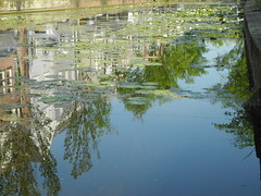 Sur un canal à Delft (serge_lesens) Tags: delft hollande nederland canal eau water pool ville city town arbre tree reflet reflection