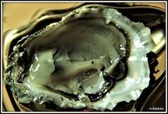 Fruit de mer : Huître (Les photos de LN) Tags: huître coquillage fruitdemer arcachon macro nature crustacé
