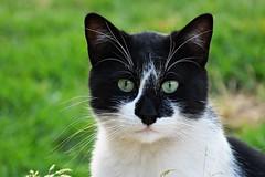 Street cat (elka.) Tags: chat cat katze kot katte neko nature gata gatta gato gatto katt animal feline γάτα кошка кошки котка