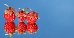 Wild Strawberries (Three) MM Explored (francepar95) Tags: macromondaysthree strawberries three macro hmm reflection