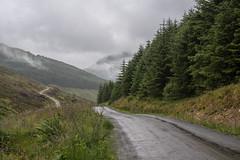 Long And Winding Road (Click And Pray) Tags: managedbyclickandpraysflickrmanagr glenbranter track scotland argyll forest foresttrack horizontal landscape woodland trees path mist intothedistance strachur hills glenbrantertrackscotlandargyllforestforesttrackhorizontallandscapewoodlandtreespathmistintothedistancestrachurhillsgbr