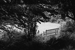 Bench Lochalsh Woodland Walk (Man with Red Eyes) Tags: hp5 ilford m2 leicam2 summilux50mm pyrocathd v850 scotland kyleoflochalsh garden woodlandwalk lochalsh walk analog analogue silverhalide monochrome blackwhite bnw sunnysixteen film filmisnotdead filmtilidie softie rapidwinder bench seat balmacara