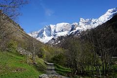 Chemin en montagne et bouquetin dans le champ (yoduc73) Tags: montagne vanoise tarentaise savoie casse bouquetin chemin randonnée ballade neige sommets