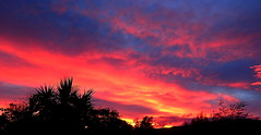 WINTER SUNSET COLOURS (Lani Elliott) Tags: nature naturephotography lanielliott sky skies paintedsky fierysky color colour colourful bright blue pink black silhouette silhouettes sunset scene scenic view scenictasmania tasmaniansunset brilliant wow gorgeous