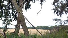 Baum (petra.wruck) Tags: pflanze pflanzen plant plants makro macro baum
