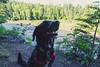 Cortana at Grand Portage State Park (Tony Webster) Tags: cortana grandportage grandportagestatepark minnesota pigeonriver dog unitedstates us