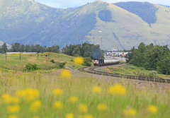 Pipeline Bound (GLC 392) Tags: mrl montana rail link 4408 emd sd70ace gas local missoula mt railroad railway road way train tank mountain mountas golden rod yellow flower hill search light signals 4406