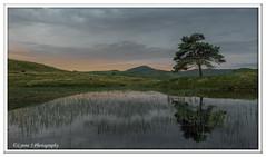 ABC_3828 (Lynne J Photography) Tags: cumbria lakedistricy kellyhalltarn sunrise nikon tarn reflection sunset lonetree lone tree waterfalls longexposure tomgillfalls