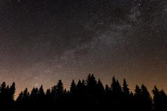 Trees and stars (eichlera) Tags: stars sky milkyway galaxy night darkness trees forest emmental switzerland