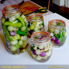 Pickled chilli peppers (brkitchengarden) Tags: chilli pickle pickling peppers