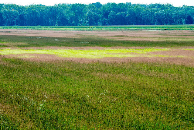 Jasper-Pulaski Fish & Wildlife Area - July 18, 2017