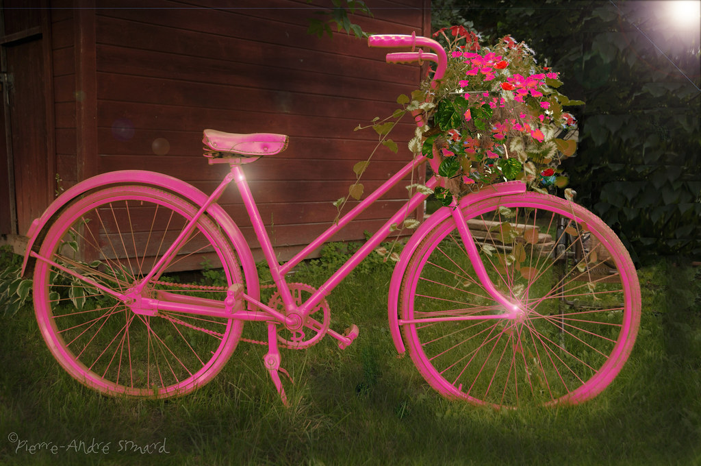 The World\'s Best Photos of fleurs and vélo - Flickr Hive Mind