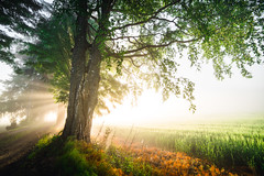 Summer morning glow (Nippe16) Tags: landscape summer green field fields color colors vibe atmosphere nature mist fog glorious misty foggy morning haze sunbeam beams sun tree trees forest woods colorful