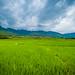 Rice fields around Paro, Bhutan